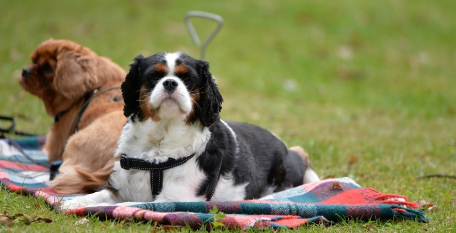 Dog friendly holiday homes