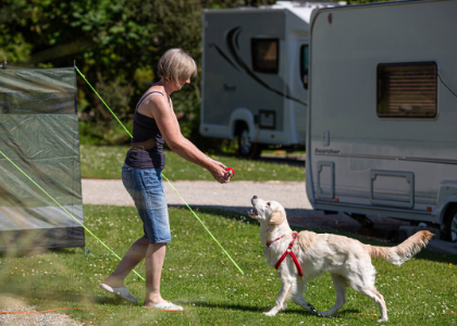 9 essential tips for camping with dogs