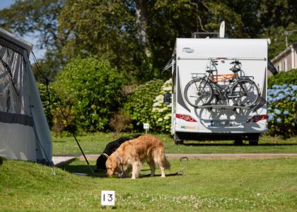 Dog friendly camping and touring pitches